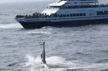 波士顿出海观鲸