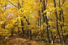 加拿大魁北克金秋季