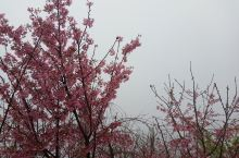 一阵清风吹来,美丽柔弱的花瓣便轻轻地飘落下来,好像寒冬纷飞的粉红色雪花拂过我的脸庞,惬意极了。我拾起