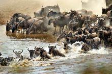 东非草原野生动物大迁徙