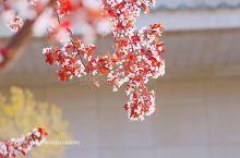 长安城中,安仁坊上,春色新露,繁花盛锦。 厚重的历史挡不住春日的新颜,破旧的墙砖映衬着万象的更迭。蔽