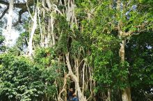 在瓦努阿图穿越热带雨林的照片,同行的人还以为我二十多岁,让我爬树摆个pose,给大家拍照片,实际上哥