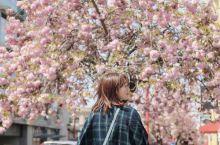 开满鲜花的维多利亚可真美呀~  从酒店步行前往内港,内港是世界上最美丽的城市之一,还有世界著名的遗产
