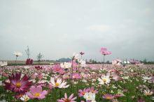 广西贺州,可能知道的人比较少,真的很美呢。慢城富川县神仙湖花海,真滴很不错呢。关键人很少,随便拍拍拍
