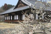 日本水户市之旅,喜欢这个地方,不错的选择!