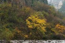 临夏康乐县「莲花山森林公园」,秋之美淋漓尽致。