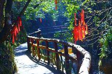 安安静静的一个景区,泉水泡茶,漫步林中。。。
