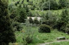 普达措森林公园徒步步道