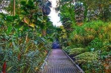 新加坡植物园绝对值得加入一生推的LIST 这个园区好大,我们步行用了5个多小时绿树成荫、草长莺飞,随