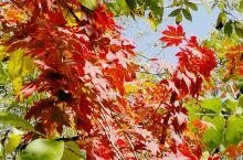 敦化寒葱岭的红叶谷名副其实,漂亮极了。