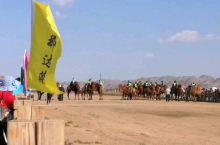 那达慕大会赛骆驼!