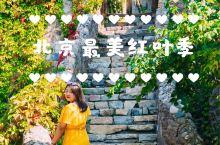 北京|最美红叶季 明天又要开始新一年的国庆朋友圈摄影大赛了! 我今年早你们一步先去把超美的京郊红叶看