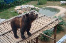 济南跑马岭野生动物园,在端午节去的,节假日,人相对平常会多一点,但是还能接受。停车场在一片荒地上,车