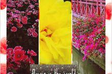 广州旅行|花城广州赏花攻略  广州号称花城,这里一年四季都有不同的花季。要在广州赏花,推荐以下三个景