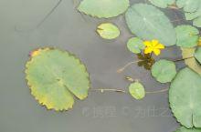 渤公岛生态公园,集水利工程、自然风光、人文景观于一体,为纪念治水先贤张渤而取名。是蠡湖36公里环湖观