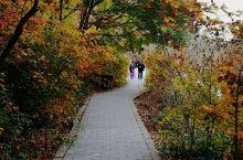 黄绿相间,层次美感,徜徉于山水之间,每年秋季赏枫好时节。