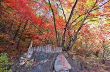 """关门山国家森林公园位于本溪满族自治县南部,这里山峰奇峭、怪石林立,素有""""东北小黄山""""的美誉。森林公园"""