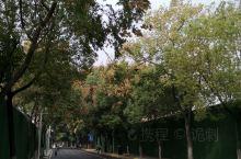 昙华林,位于老武昌的东北角,地处城墙内的花园山北麓与螃蟹岬(亦名城山)南麓之间,随两山并行呈东西走向