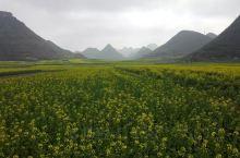 从贵州兴义到云南罗平只有70公里,油菜花还没有很黄然后驱车150公里,5个小时到达丘北普者黑。一路崎