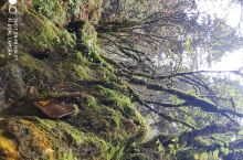 国家级原始森林保护区,海3400米左右,没有缺气感,瀑布气势宏大.森林完好,值得一看,也望游客用心保