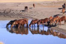 呼伦贝尔大草原以及根河湿地,室韦,额尔古纳河,莫尔道嘎森林公园是这次旅行的一部分地方,十月黄金周,草