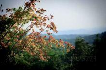 栖霞山是南京的文化名片。每到秋季,栖霞山丹枫似火、层林遍染,是中国四大赏枫胜地,与北京香山一南一北,
