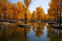 甘肃酒泉市金塔胡杨林,美不胜收,置身其中苑若进入仙境,在每年十月十五日左右最艳丽,值得一去。