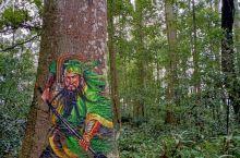 麻沙镇楠木林景区,内有3D树洞画,木木乐园,植物科普园……
