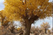 这颗树漂亮