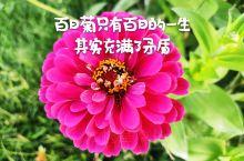 辨认花草是一个细致活,有些花草太过相似了,就经常会被误认,菊花类的植物,就是容易被认错的代表之一。