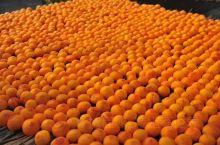 其它城市的色彩可能是五彩缤纷,临汾确以黄澄澄的柿子渲染着这一季最美的秋。柿柿如意,来自山西云丘山的祝