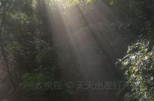 晨间阳光透出树林,如此美妙