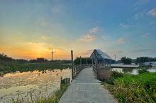 来上海这么久,第一次到传说中的崇明岛 东滩湿地公园的日落美如画