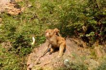 环翠峪猴子