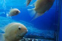 天目湖也有海洋馆,虽然不大,鱼类倒也不少