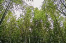 """coming,蜀南竹海,位于四川省南部宜宾市,其因竹子之多连片被称之为""""蜀南竹海""""。 看第一张图片,"""