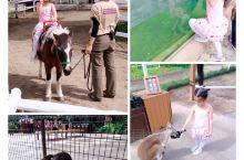 行程安排:  神户动物王国    明石海峡大桥    有马温泉    阪神甲子园球场   1.神户动