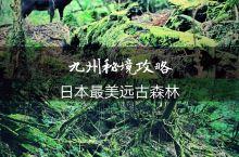 日本九州旅行秘境攻略森林+温泉+皮划艇等 第一次尝试用图文手账的方式介绍, 想咨询的,欢迎留言。 九