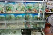 福建地区就是靠海吃海,海鲜特别的新鲜,老板都是亲自去海边拿的新鲜的海货,冻品尤其是海鲜在这边很难卖,
