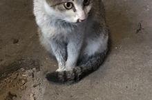 红双喜酒楼 来到平江老乡家里做客,传统的乡里饮食吸引了我们,连脚下的猫咪也是那么听话,眼神随着火苗一