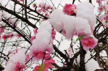 美丽雪中木札岭