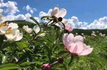 #呼伦贝尔大草原[地点]# 呼伦贝尔旅游攻略呼伦贝尔旅游攻 呼伦贝尔旅游什么季节最好? 交春末夏初: