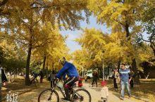 去太阳沟的时间上选择秋季,秋季太阳沟的大道才会是下图的效果。冬季去就是光秃秃的一片。交通工具你可以自