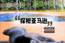 深入亚马逊雨林无信号区我钓起了食人鱼冒了这些险~ 我有一个和狂野有关的梦,那里有长在水里的树,住在房