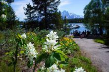 大提顿国家公园 大提顿国家公园:位于美国怀俄明州西北部壮观的冰川山区,1929 年建立,占地1256