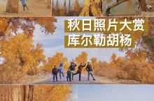 秋日照片大赏|库尔勒胡杨