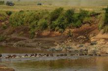 来肯尼亚怎能不去马赛马拉,天国之渡,树丛下懒洋洋的狮子,树上瞌睡的花豹,树荫下猎豹兄弟,还有优雅的长