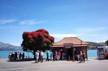 新西兰南岛的法国风情小镇阿卡罗阿(Akaroa)是去新西兰旅游的必去之地。拥有浓浓的法国风情、美丽的