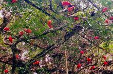 伊瓜苏鸟园的珍禽。