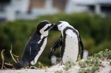 在自然环境中看到企鹅比在笼子里自在得多,人行道非常适合观赏丛林和海滩中的企鹅。虽然人满为患,但是并不